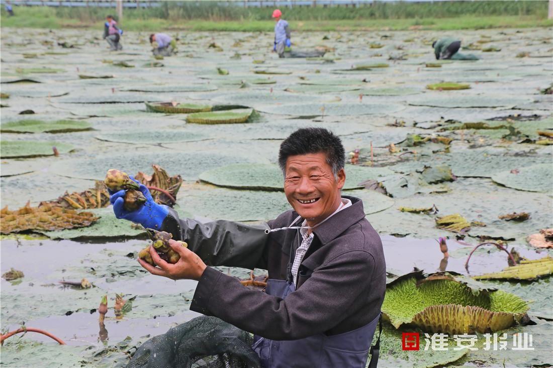 小芡实成富民强村大产业