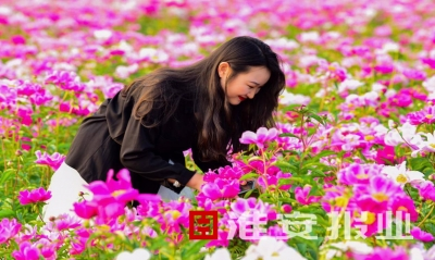 【新时代 新作为 新篇章】江苏金湖:芍药娇艳开 游客沓至来