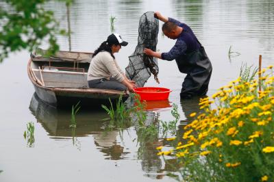 【新时代 新作为 新篇章】江苏金湖:乡村振兴路上党旗红