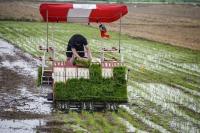 抢收抢种干起来!全市小麦收了八成多,水稻栽播超三成