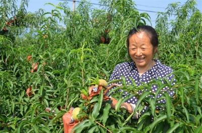 【新时代 新作为 新篇章】  江苏金湖:村居环境改善 百姓幸福花开