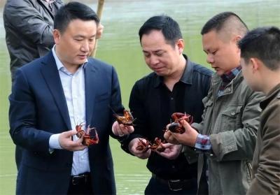 """【新时代 新作为 新篇章】  """"跟着张太明,携手奔小康""""  龙虾产业红火金湖小康路"""