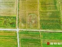 创意水稻画 五彩田园梦