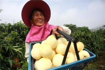 【新時代 新作為 新篇章】江蘇金湖:綠色富民,讓全面小康成色更足