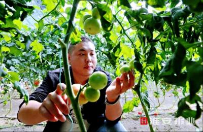 """江苏淮安丁集镇:""""一核双驱""""培优特色产业"""