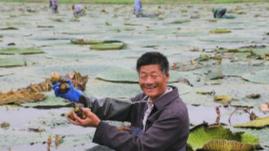 """淮安卢滩村:""""芡实塘""""里蹚出一条脱贫""""致富路"""""""