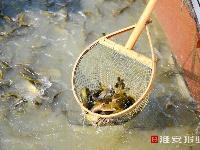 """""""菜篮子""""加个菜,""""昂刺鱼""""新上市"""