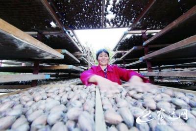 【走向我们的小康生活】宿迁泗洪:富民产业蓬勃发展 托起农民小康梦
