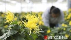 【走向我们的小康生活】江苏洪泽八卦:幸福花开幸福来
