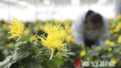 【走向我们的小康生活】江苏洪泽:幸福花开幸福来