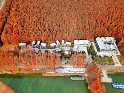 【新时代 新作为 新篇章】  江苏金湖:绘就全域旅游美丽画卷