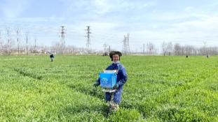 【新时代 新作为 新篇章】江苏金湖:农技下乡助力夏粮稳产丰收