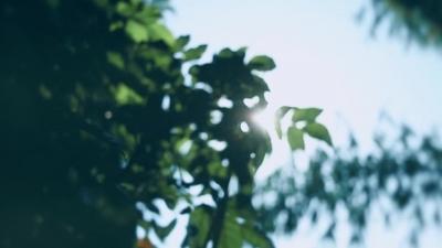 植绿树 唱红歌 快闪献礼建党百年
