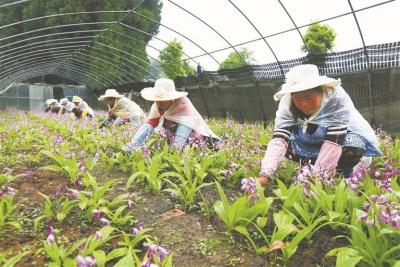 泰州:结合岗位优势、发挥所长 人大代表携手贫困户全面奔小康