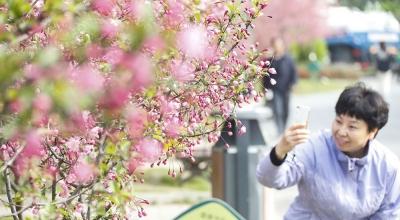 楚秀园第八届海棠花节开幕!花都开好了,就等你来!