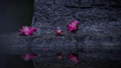 悦·见淮安 | 闲斟春酒对看花