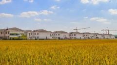 江苏涟水:农村有个美样子 农业有条富路子