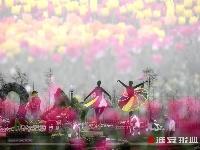 江苏大丰:3000万株郁金香的视觉盛宴