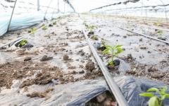 ?【新时代 新作为 新篇章】江苏淮安:特色产业强起来 农民钱袋鼓起来