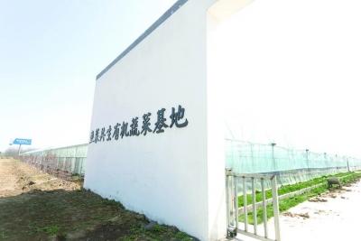 """【鄉村振興】""""魚菜共生""""打造盱眙鄉村振興新風景!"""