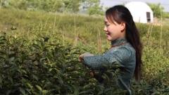 """盱眙:以""""茶""""载""""史"""",加速茶旅融合新发展"""